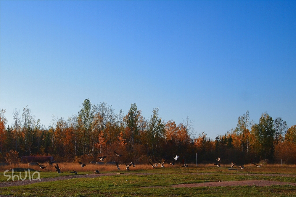 Lots of geese hang out here during the Fall.